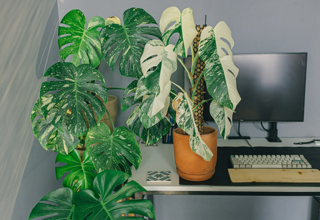 A desk with a green plant